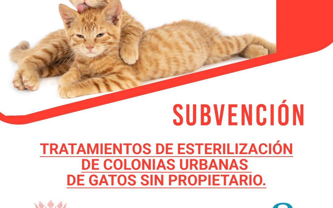Subvención Tratamientos de esterilización de colonias urbanas de gatos sin propietario